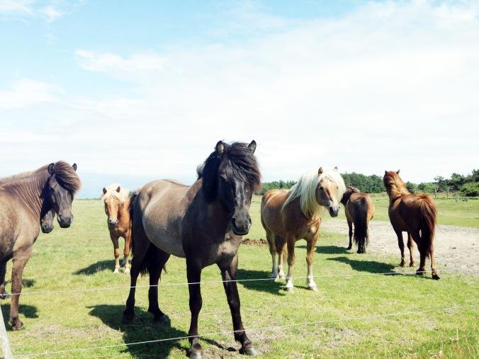 hästar2